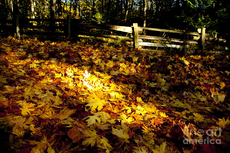 Golden Photograph - Golden Autumn Leaves by Graham Foulkes
