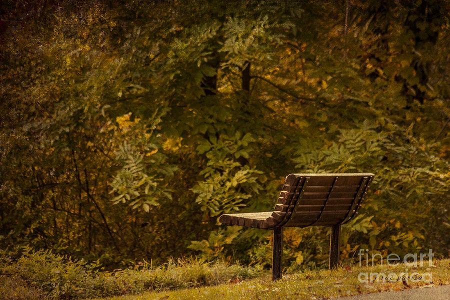 Golden Autumn Solitude Photograph