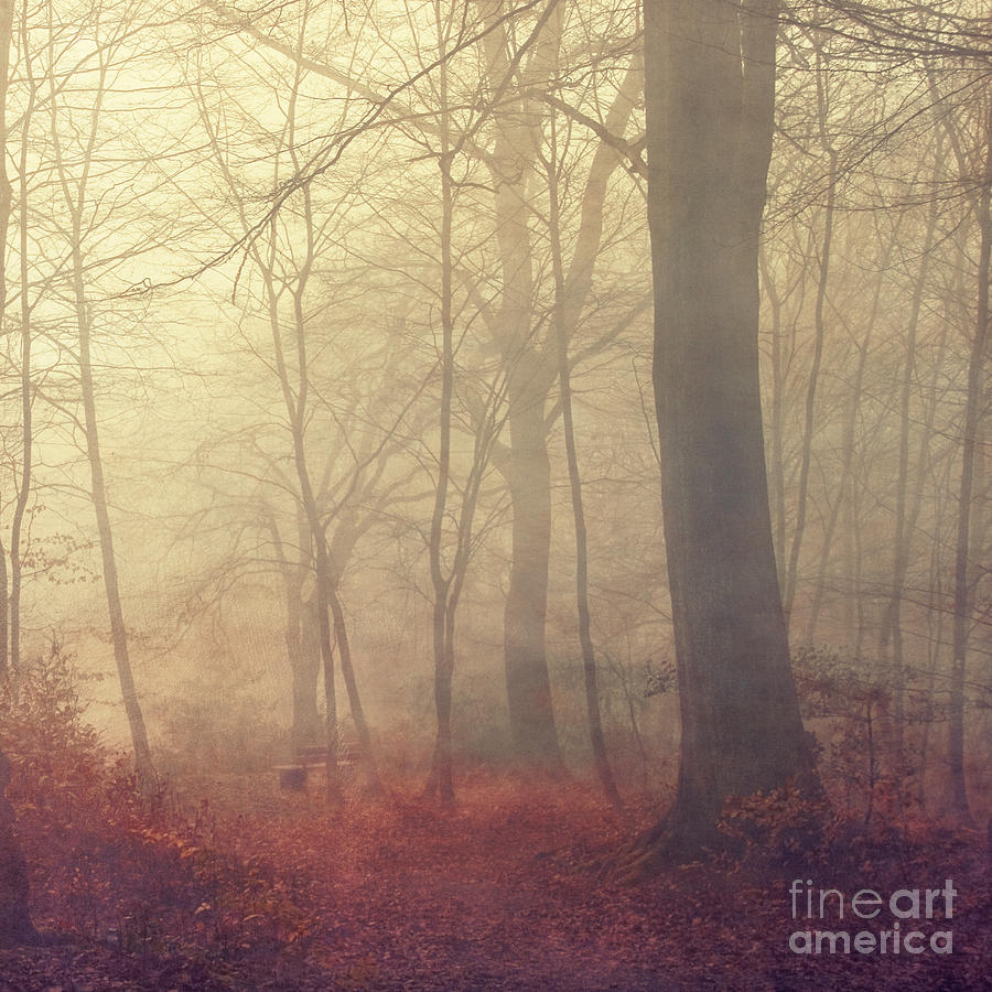 Golden Fog Photograph