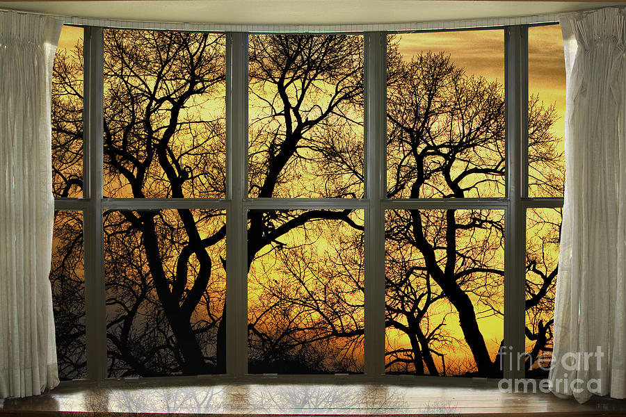 Golden Forest Bay Picture Window View Photograph