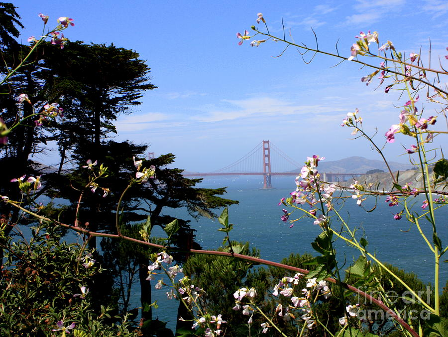 Golden Gate Bridge And Wildflowers Photograph  - Golden Gate Bridge And Wildflowers Fine Art Print
