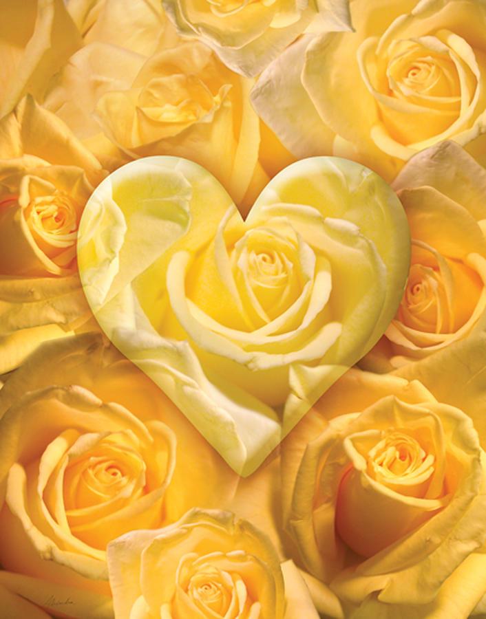 Golden Heart Of Roses Photograph
