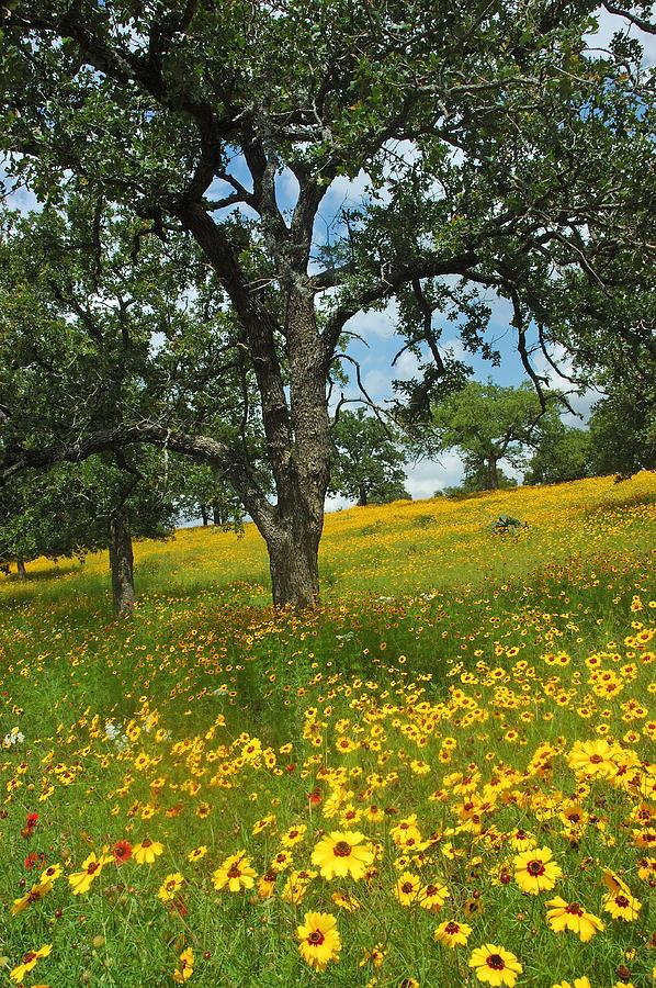 Wildflowers Photograph - Golden Hillside by Robert Anschutz