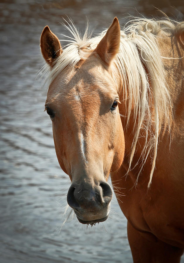 Golden Horse Photograph
