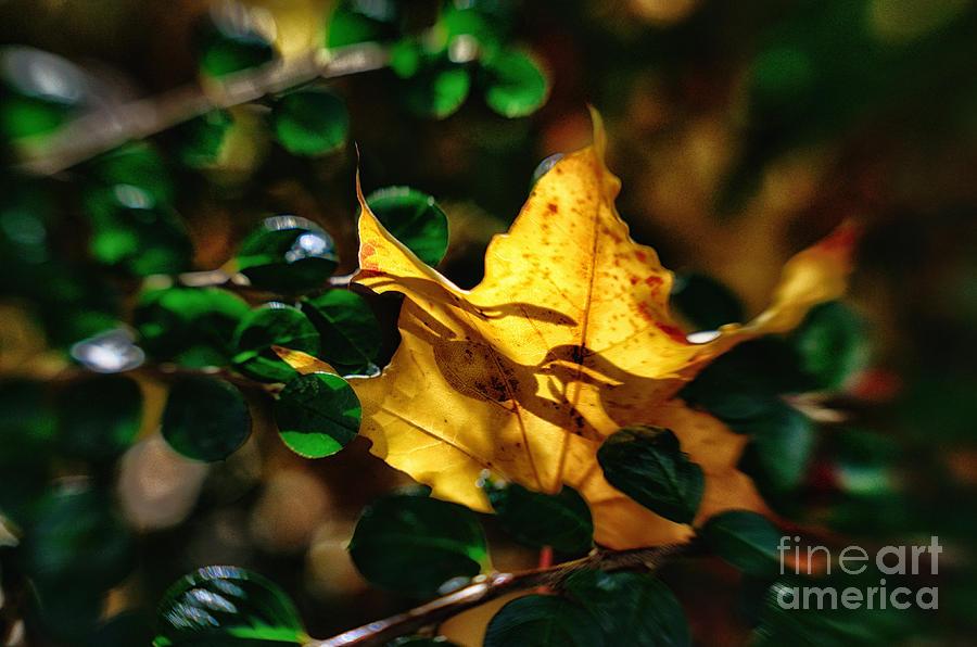 Golden Moment Photograph