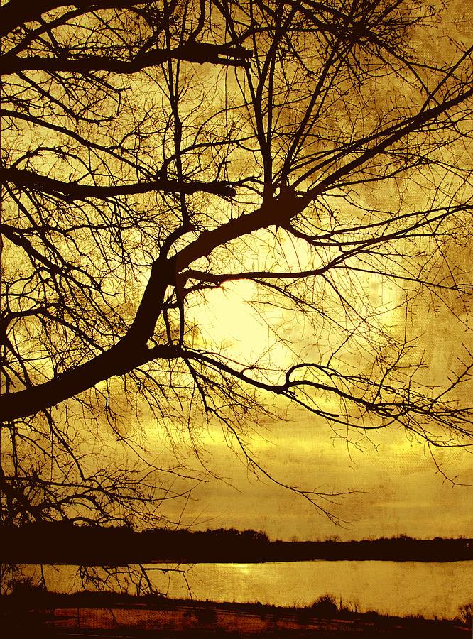 Golden Pond Photograph