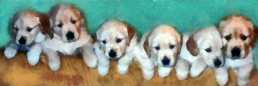 Golden Puppies Photograph  - Golden Puppies Fine Art Print