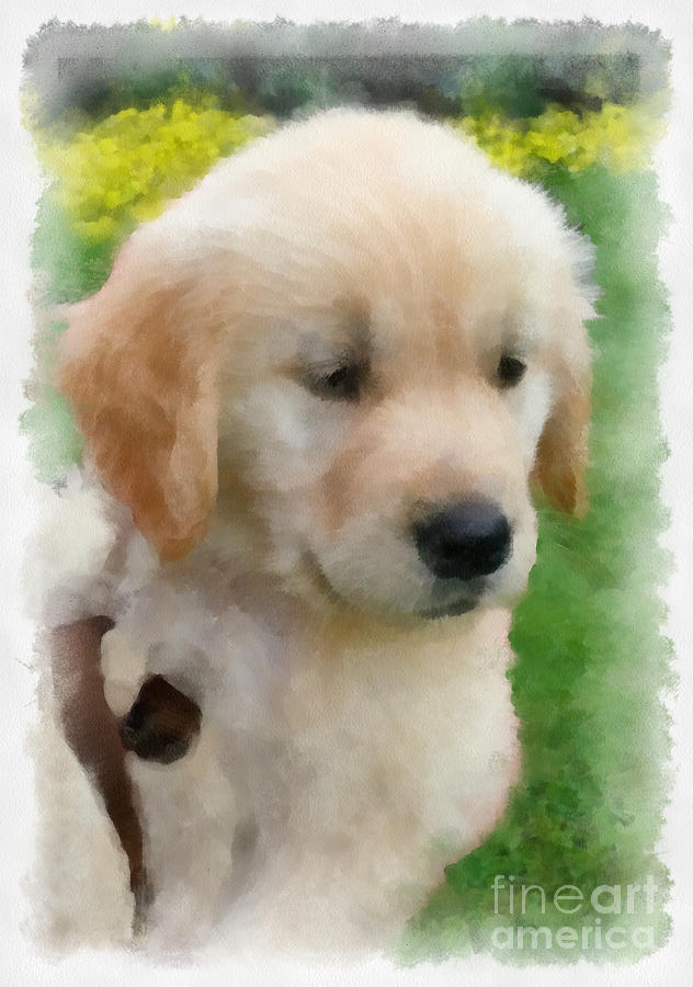 Golden Puppy Owen Digital Art