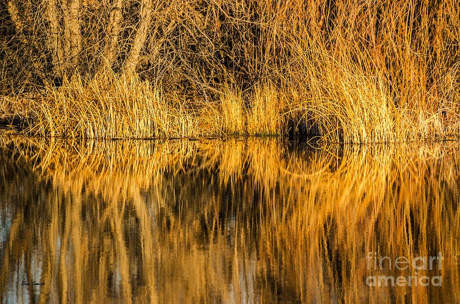 Golden Reflections Photograph