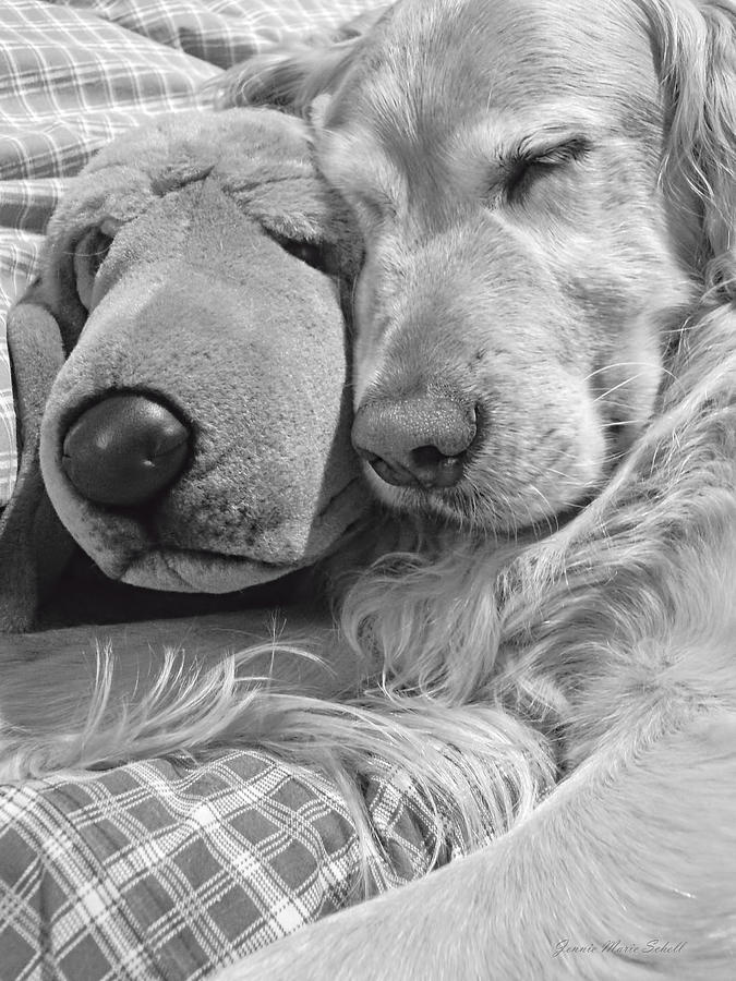 Golden Retriever Dog And Friend Photograph