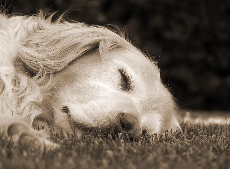 Image result for sweet dreams puppies