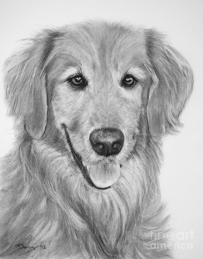 Golden Retriever Sketch Drawing by Kate Sumners