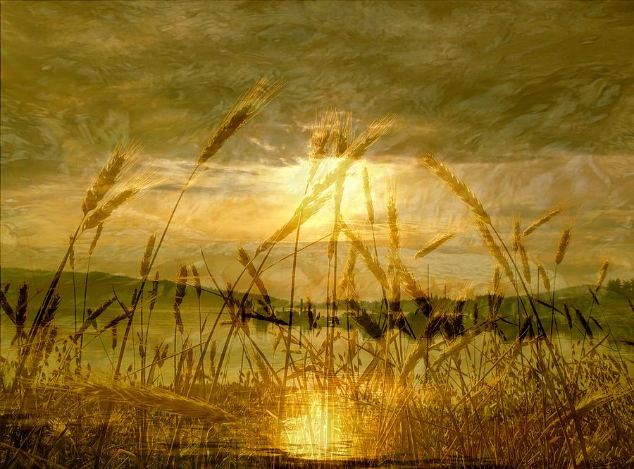 Golden Sunset Photograph  - Golden Sunset Fine Art Print