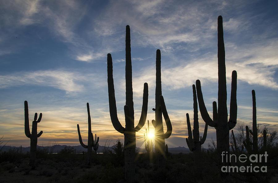 Golden Sunset - Saguaro National Park Photograph