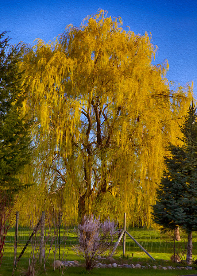 Golden Willow Tree Painting