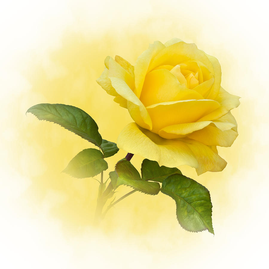 Gold Roses Clip Art - Bing images