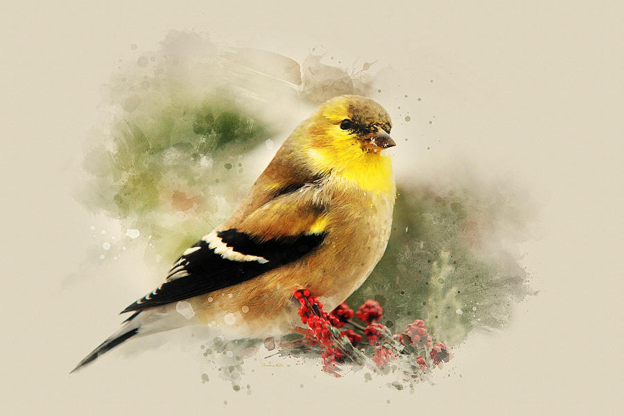 Goldfinch Watercolor Art Painting by Christina Rollo