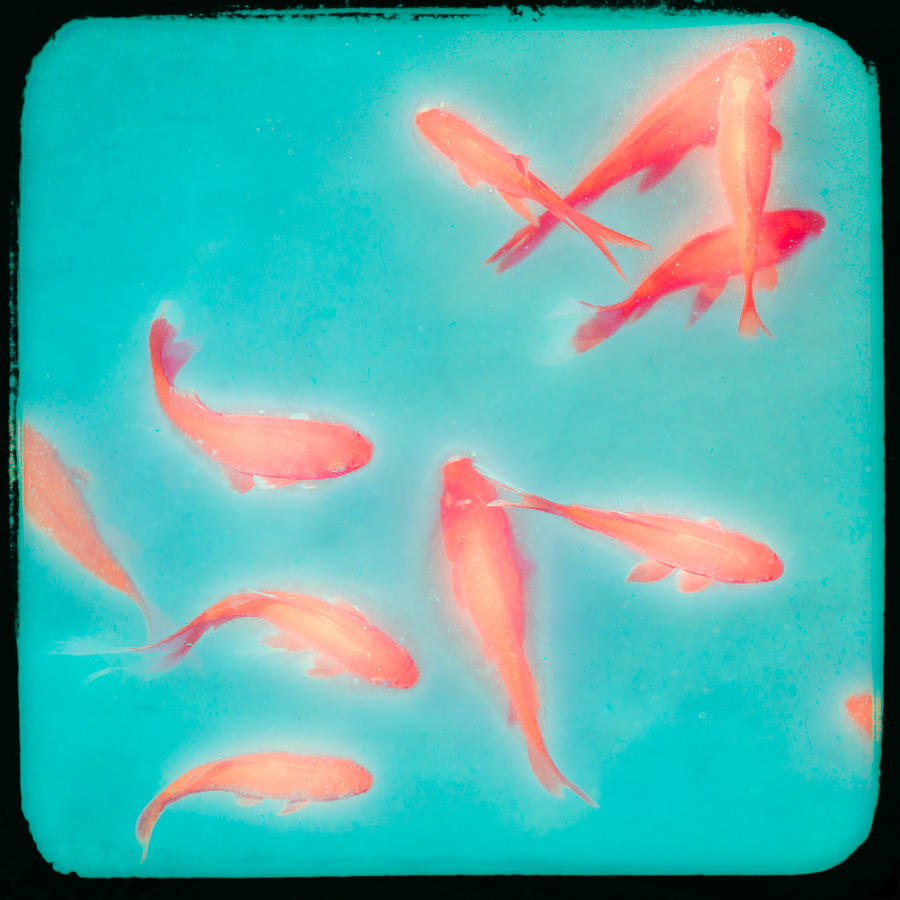 Goldfish - Glowing Fish - Gary Heller Photograph