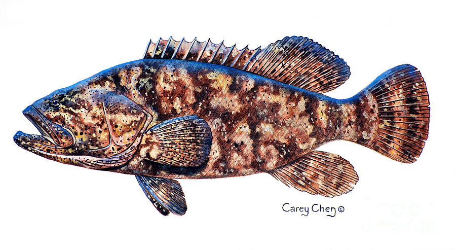 Goliath Painting - Goliath Grouper by Carey Chen