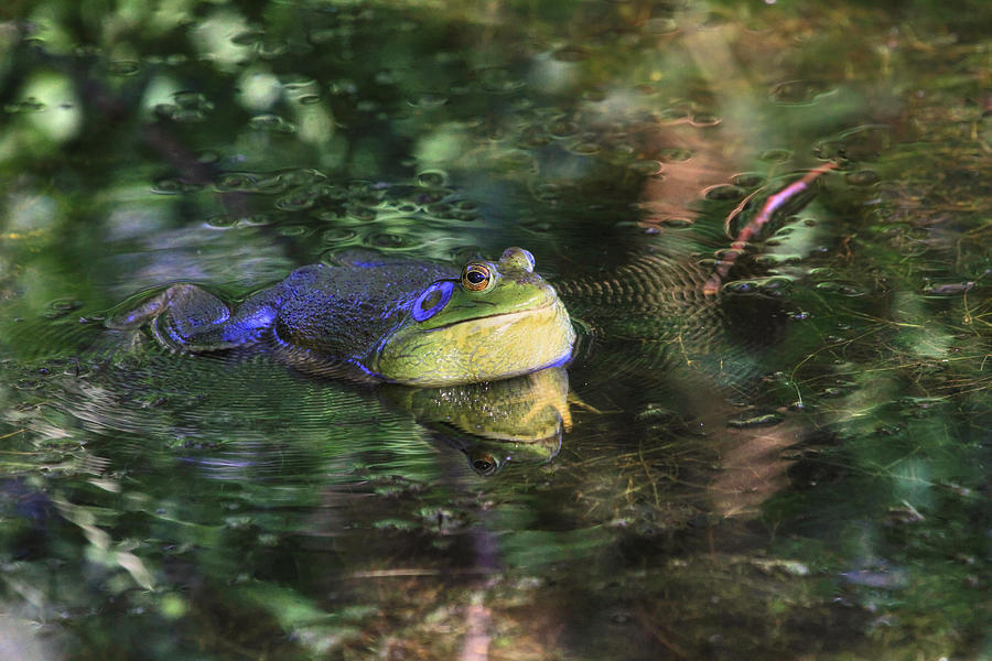 Bullfrog Photograph - Good Vibrations by Donna Kennedy
