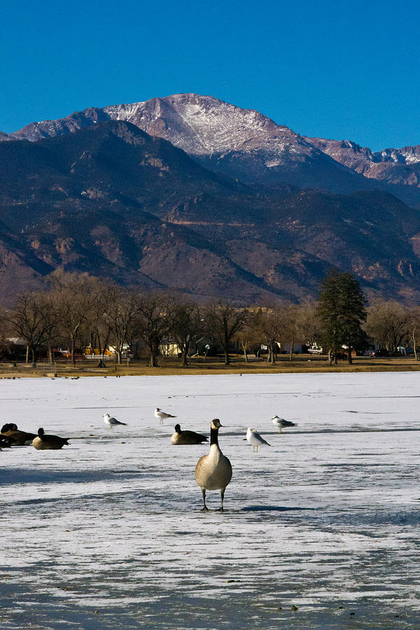 Goose At The Peak Photograph  - Goose At The Peak Fine Art Print