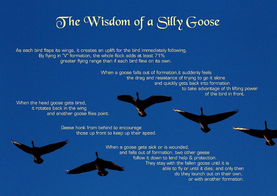 Goose Wisdom Photograph