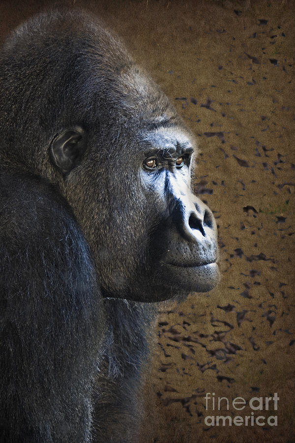 Gorilla Portrait Photograph