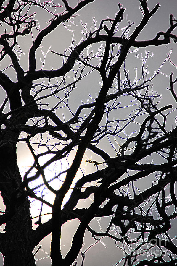 First Star Art By Jrr Photograph - Goth Tree by First Star Art