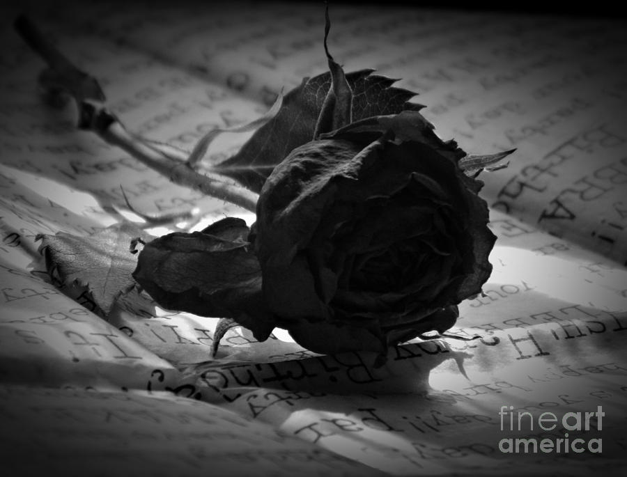 Gothic Birthday Rose Bw Photograph By Chalet Roome Rigdon