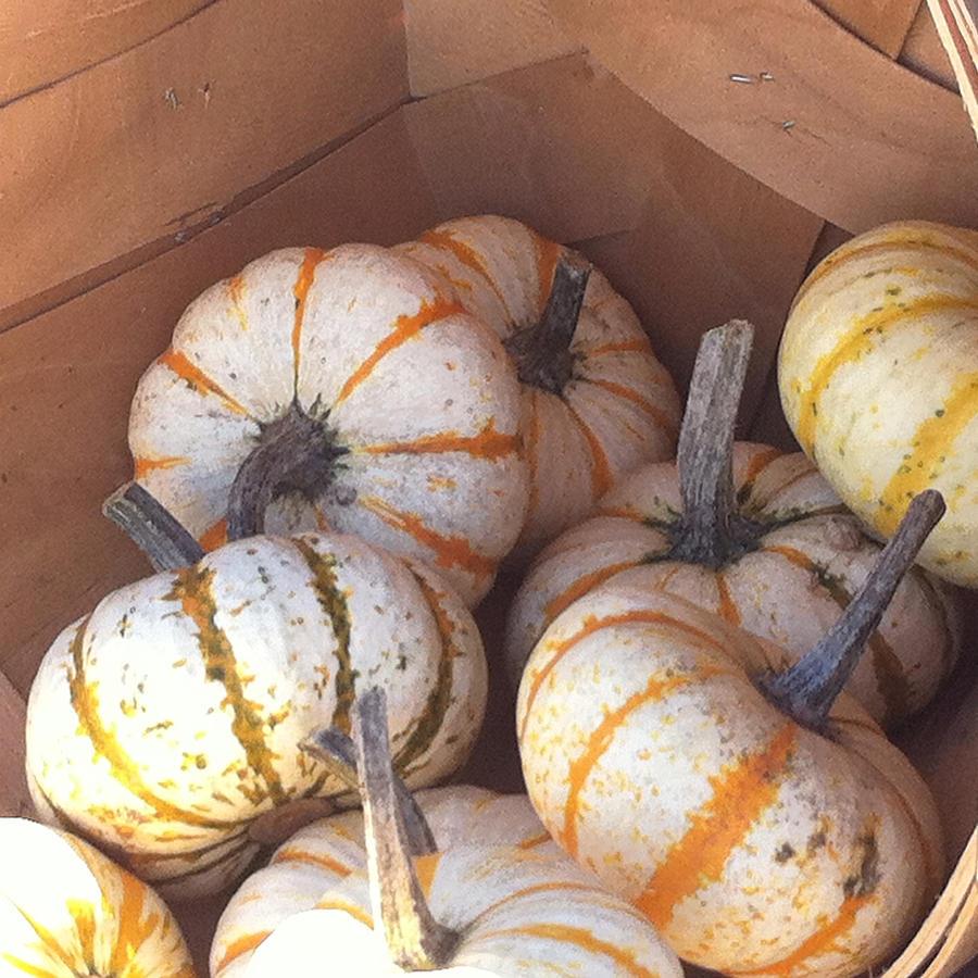 Gourd Harvest Photograph