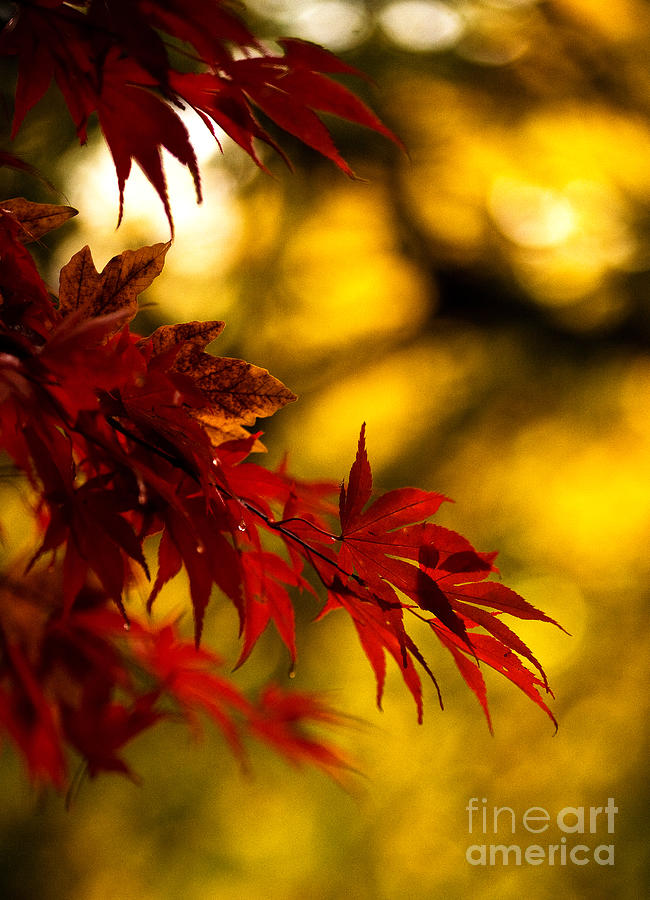 Graceful Leaves Photograph