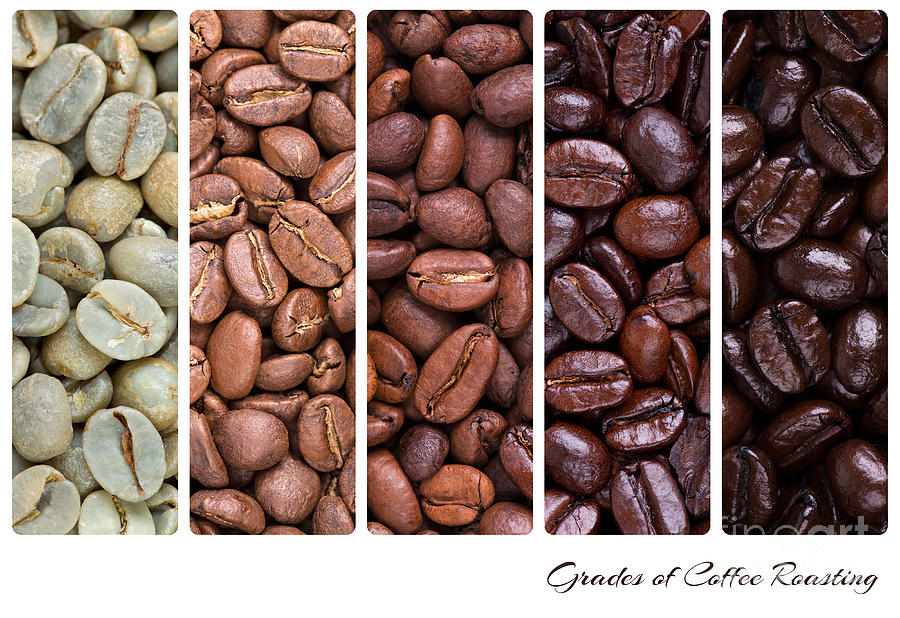 Grades Of Coffee Roasting Photograph  - Grades Of Coffee Roasting Fine Art Print