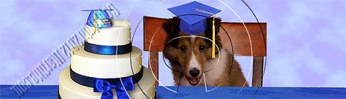 Graduation Sheltie Puppy # 538 Photograph