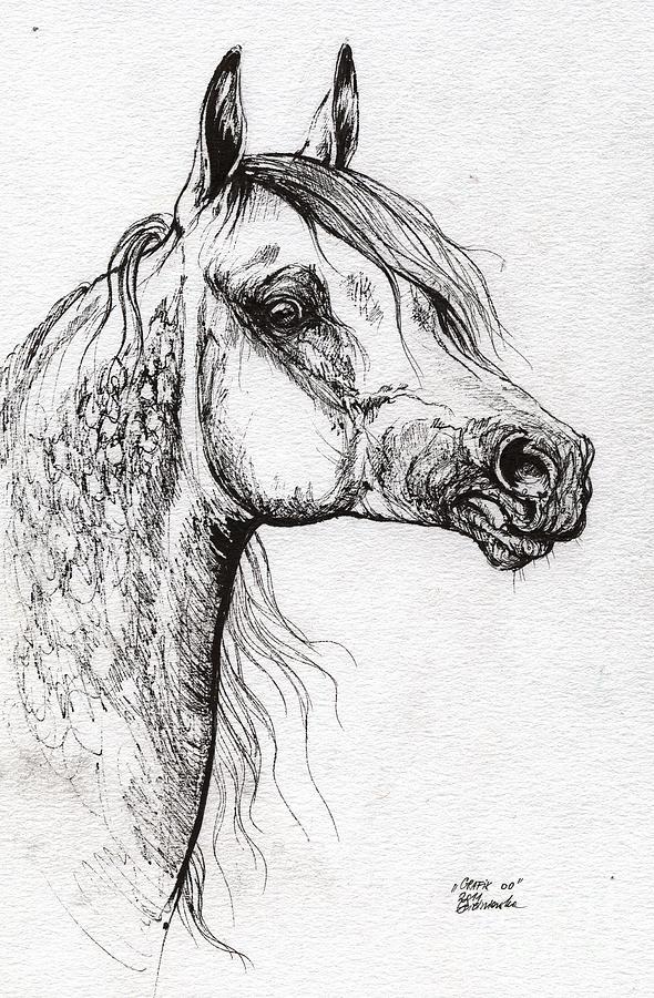 Grafik Polish Arabian Horse Ink Drawing 1 Drawing By Angel