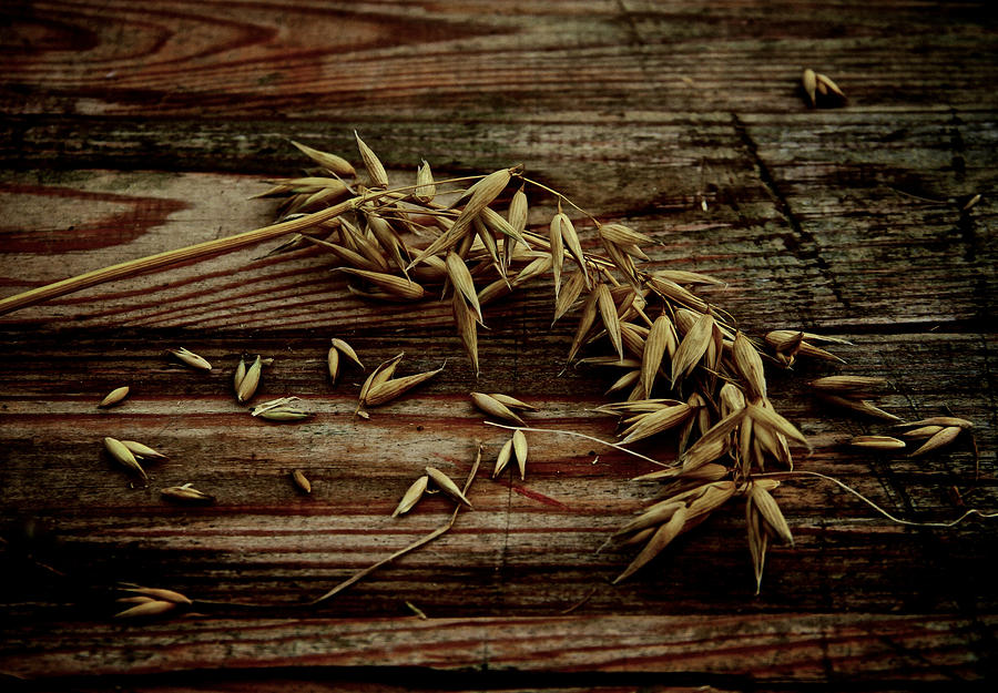 Grain Photograph  - Grain Fine Art Print