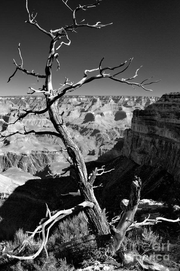 Grand Canyon Bw Photograph