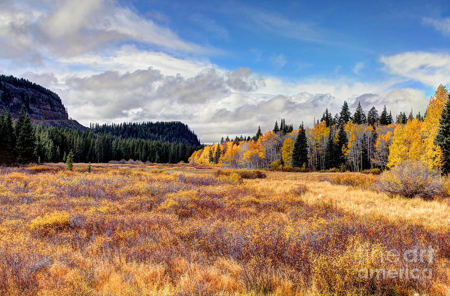 Colorado Photograph - Grand Mesa Colors by Bob Hislop
