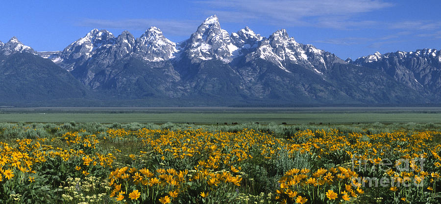 Grand Teton Summer Photograph