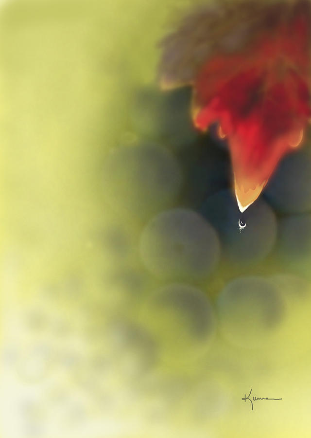 Grape Leaf Water Drop Photograph