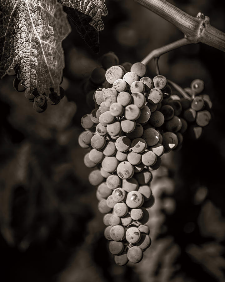 Grapes In Grey 4 Photograph