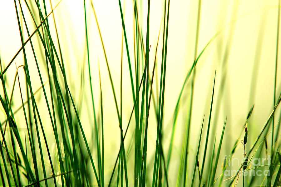 Grass Background Photograph  - Grass Background Fine Art Print