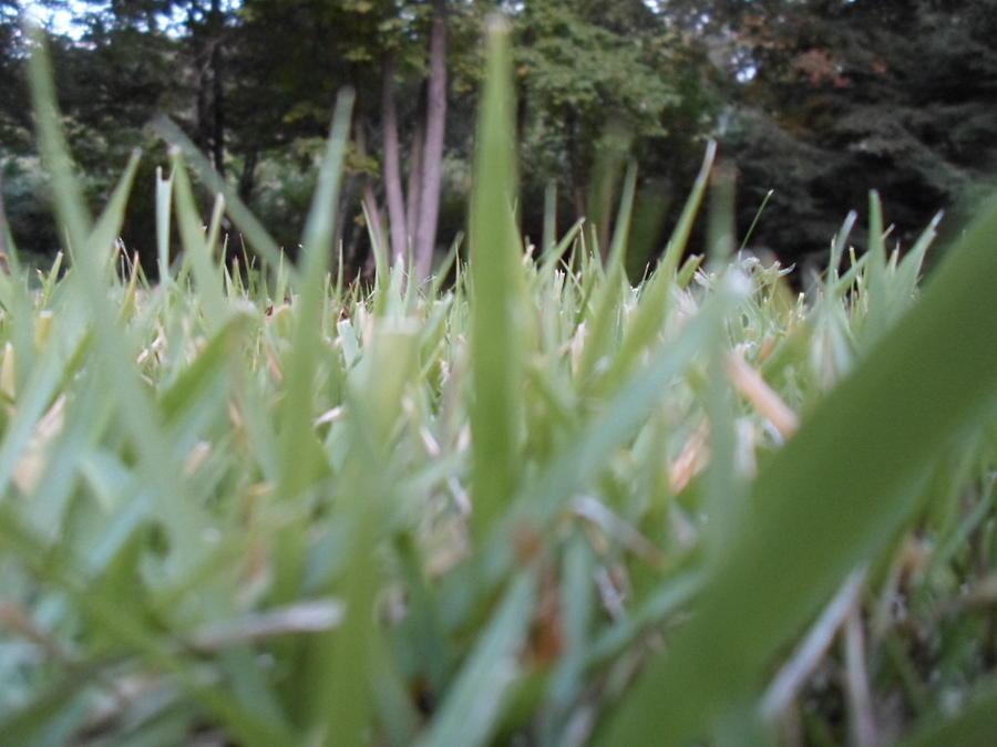 Grass Blades Photograph