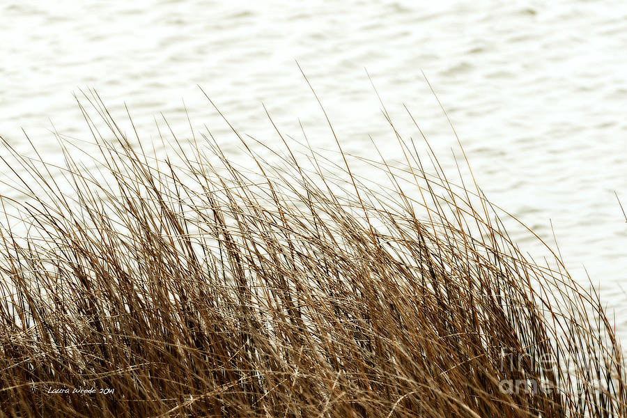 Grass Down By The Shore Of Virginia Beach Photograph