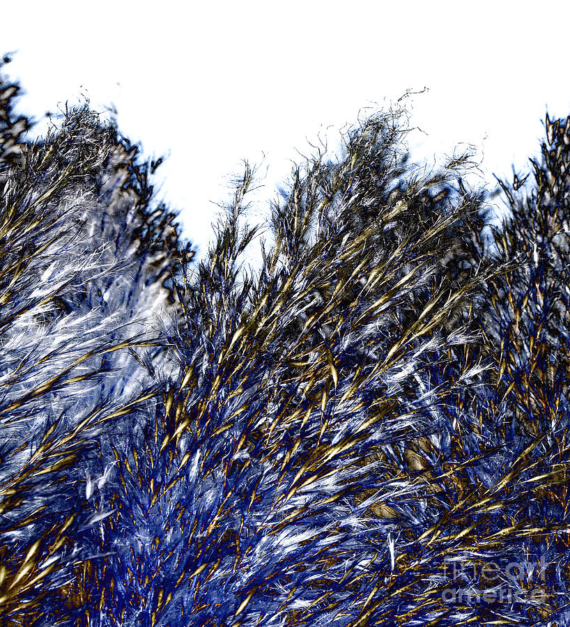 Grass Digital Art