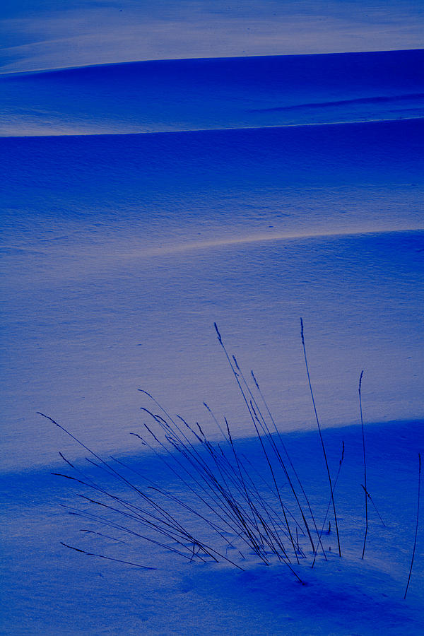 Grasses And Twilight Snow Drifts Photograph