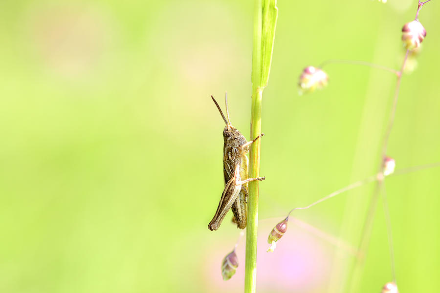 Grasshopper  Mixed Media