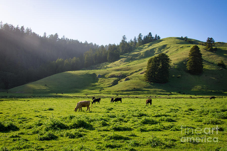 Grazing Hillside Photograph