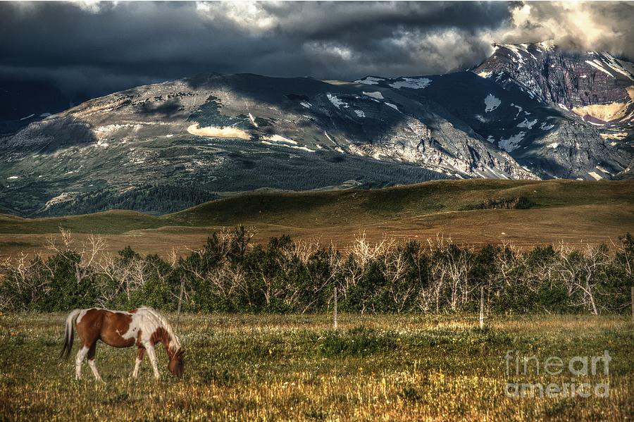 Grazing The Cutback Photograph  - Grazing The Cutback Fine Art Print