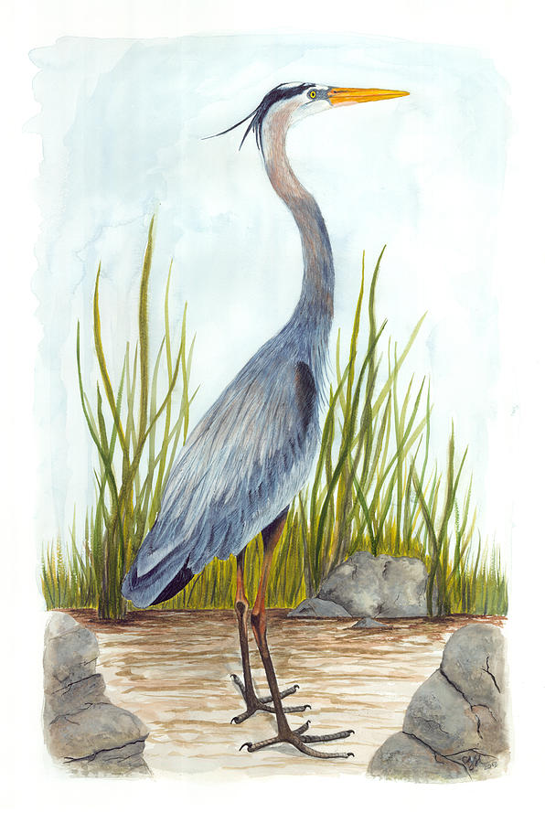 great blue heron painting by cindy hitchcock