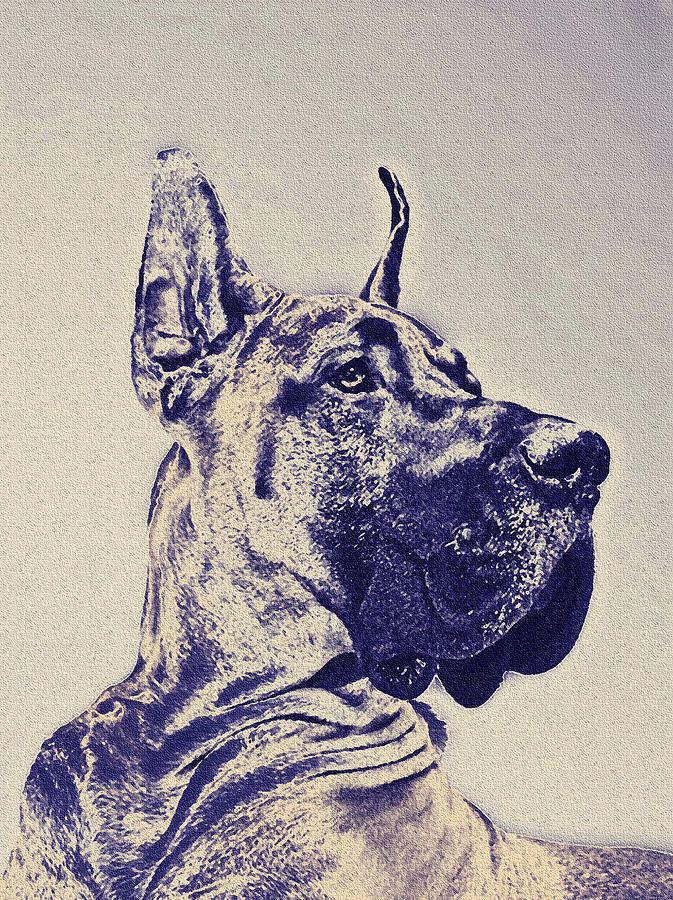 Great Dane Digital Art - Great Dane- Blue Sketch by Jane Schnetlage